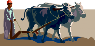 man-plowing-with-oxen-team-940x4601