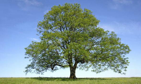 Ash-tree-747435