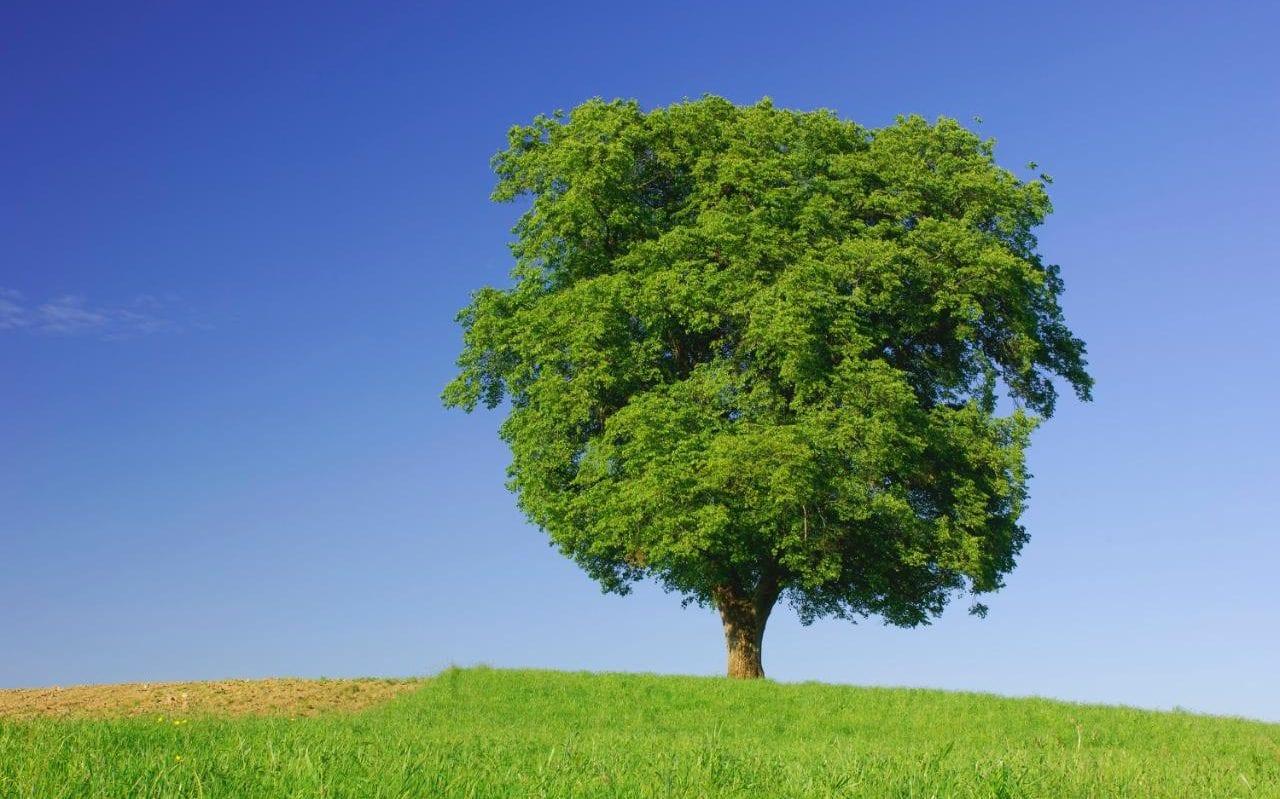 107667228_beech-tree-NEWS-xlarge_trans_NvBQzQNjv4BqplGOf-dgG3z4gg9owgQTXEmhb5tXCQRHAvHRWfzHzHk
